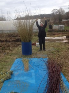 Hilary Burns sorting willow by length