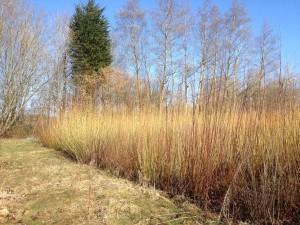 willow field 600